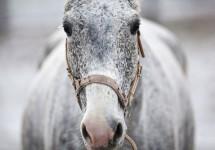 horse_v9.jpg